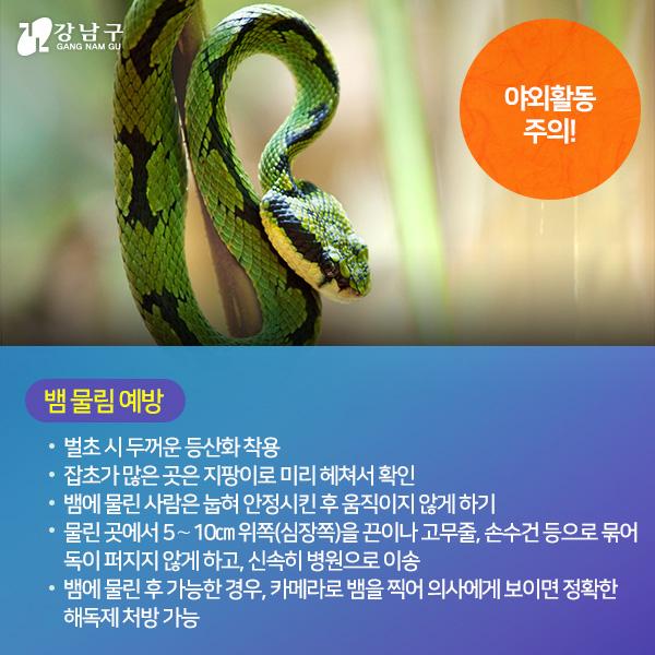 야외활동 주의! : 뱀 물림 예방