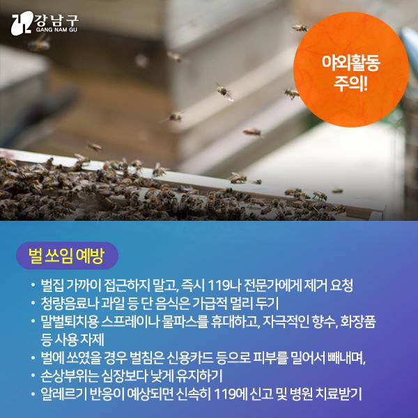 야외활동 주의! : 벌 쏘임 예방