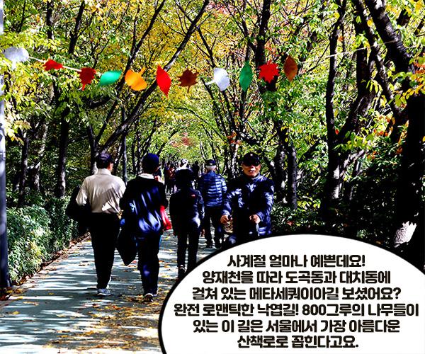 - 사계절 얼마나 예쁜데요! 양재천을 따라 도곡동과 대치동에 걸쳐 있는 메타세쿼이아길 보셨어요? 완전 로맨틱한 낙엽길! 800그루의 나무들이 있는 이 길은 서울에서 가장 아름다운 산책로로 꼽힌다고요.