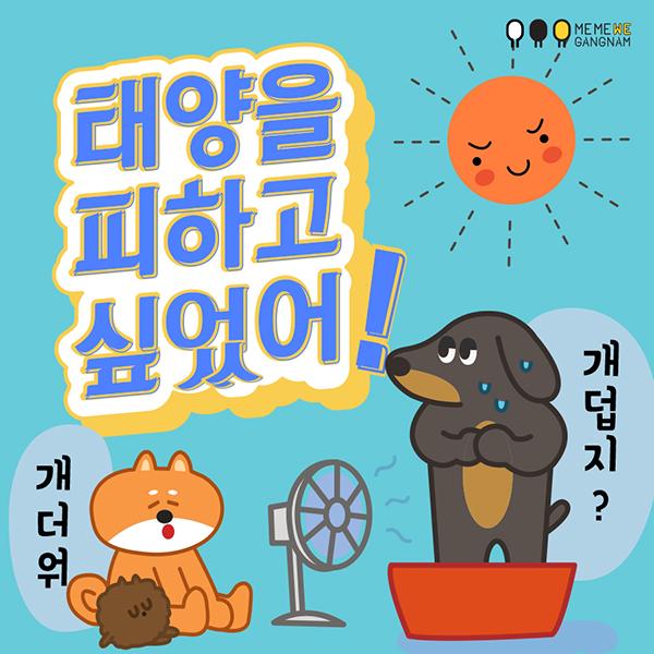 [카드뉴스] 태양을 피하고 싶었어!