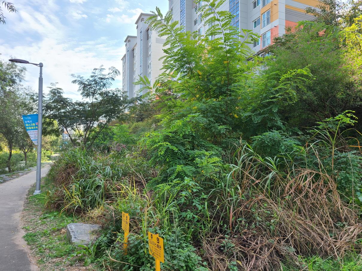 강남구가 세곡천변의 외래식물을 제거하고 24종의 꽃나무를 새로 심었다